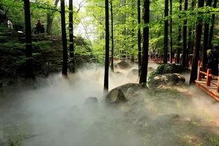 园林降温喷雾案例